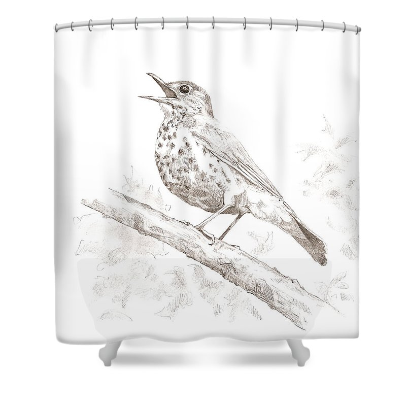 Bird Shower Curtain featuring the drawing Wood Thrush by Abby McBride