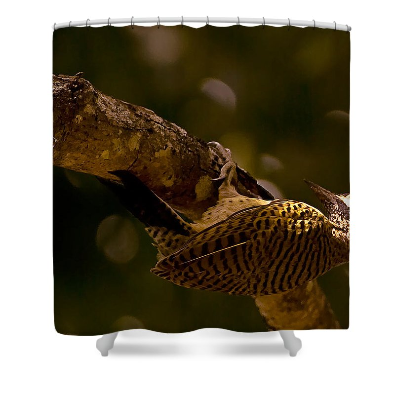 Woodpecker Shower Curtain featuring the photograph Woodpecker by Galeria Trompiz