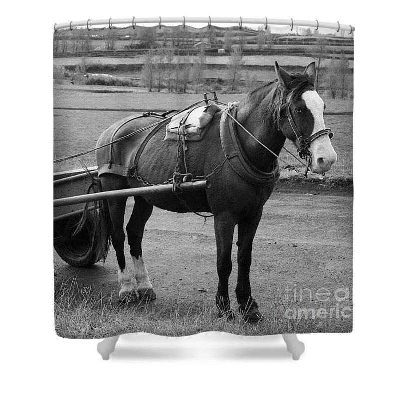 Cart Shower Curtain featuring the photograph Work Horse And Cart by Gaspar Avila