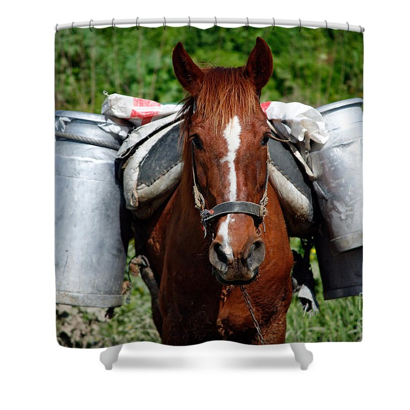 Countryside Shower Curtain featuring the photograph Work Horse At The Azores by Gaspar Avila