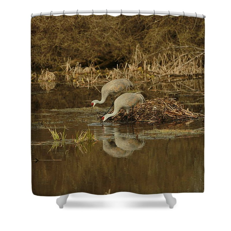 Cranes Shower Curtain featuring the photograph Working Together by Melvin Busch