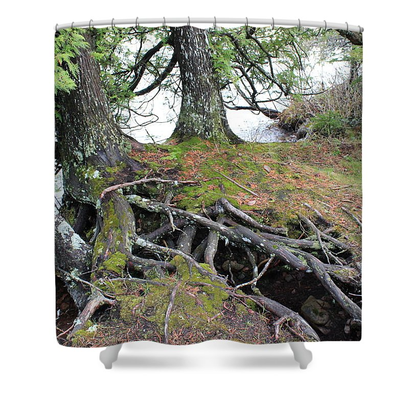 Pure Shower Curtain featuring the photograph Woven Roots by Two Bridges North