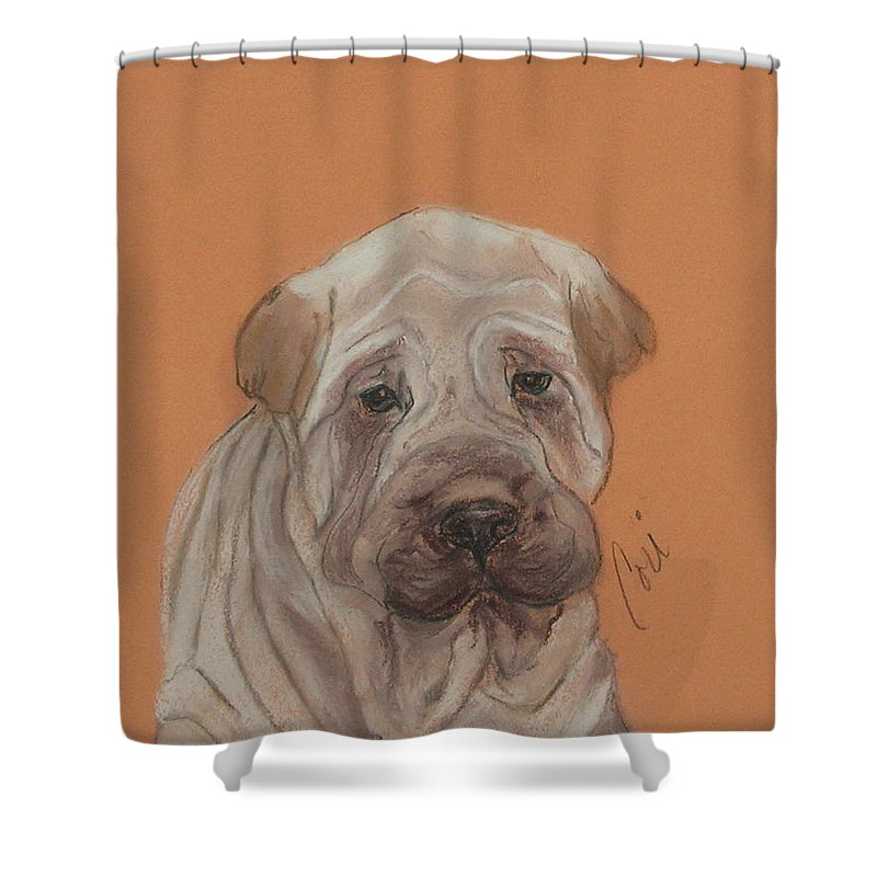 Shar Pei Shower Curtain featuring the drawing Wrinkles by Cori Solomon