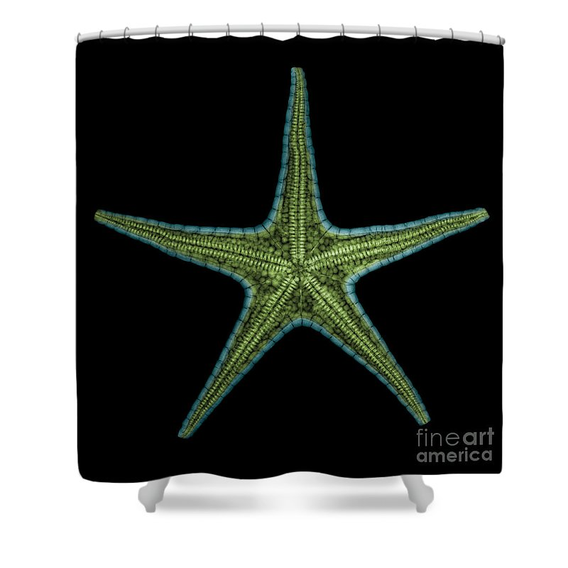 Xray Shower Curtain featuring the photograph X-ray Of Starfish by Ted Kinsman