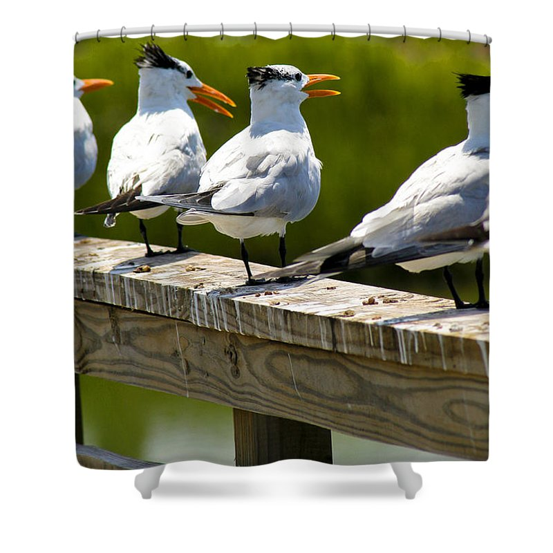 Bird Shower Curtain featuring the photograph Yackety Yackety by Marilyn Hunt