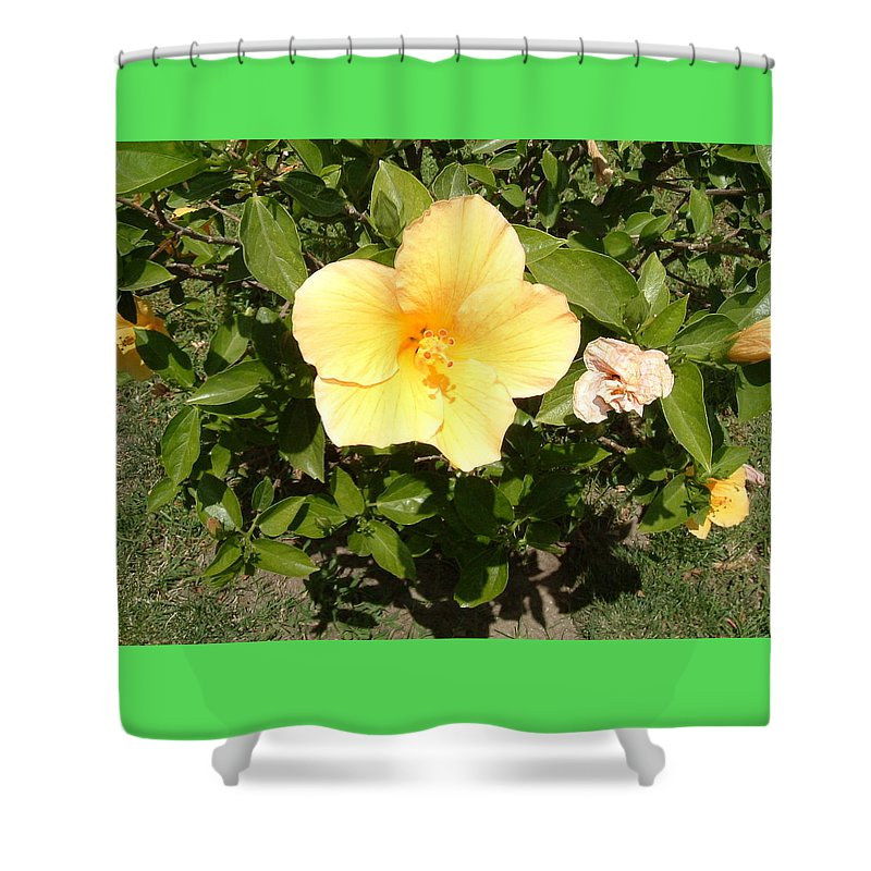 Flower Shower Curtain featuring the photograph Yello Hibiscus by Laurence Northcote