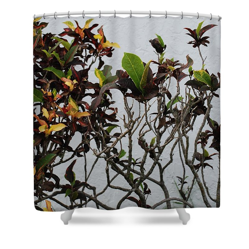 Macro Shower Curtain featuring the photograph Yellogreen by Rob Hans