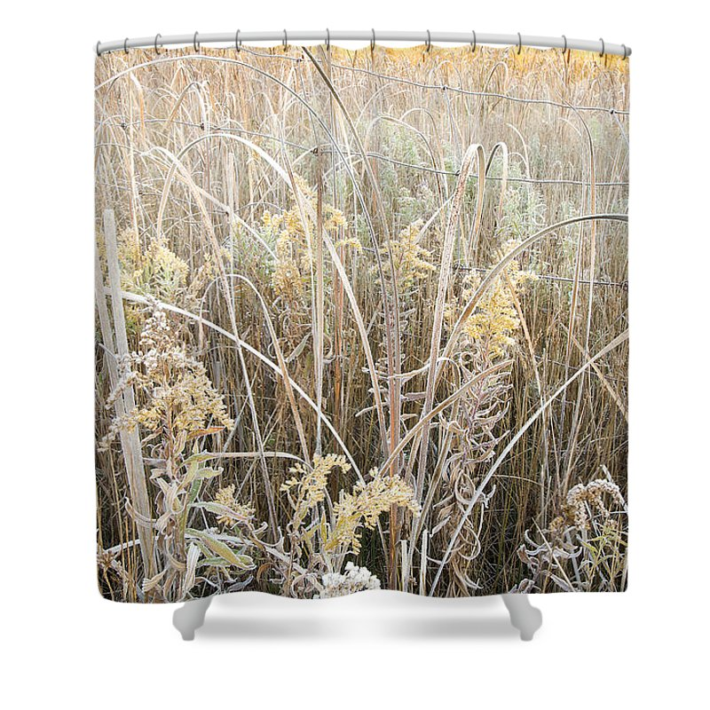 Canada Shower Curtain featuring the photograph Yellow  by Doug Gibbons