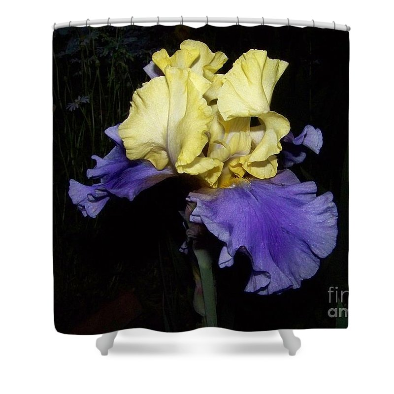 Iris Shower Curtain featuring the photograph Yellow And Blue Iris by Kathy McClure