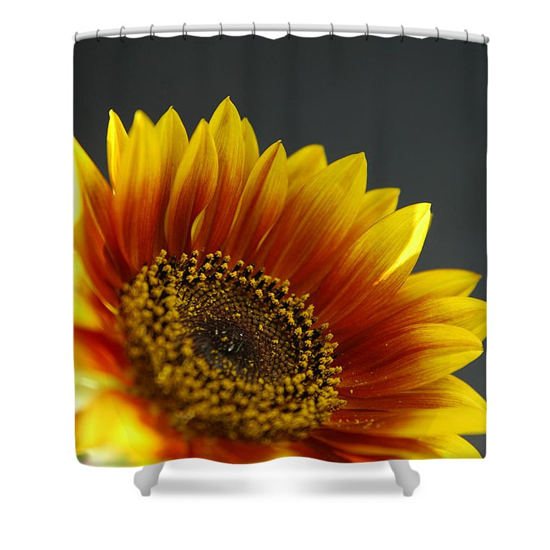 Yellow Shower Curtain featuring the photograph Yellow And Orange Gerber by Ilan Amihai