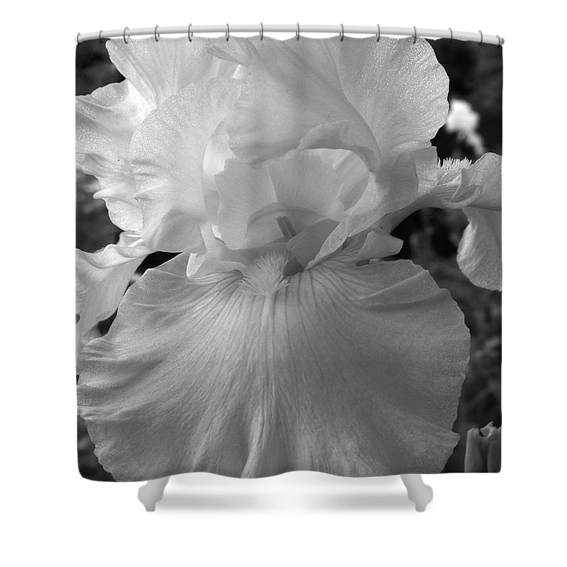 Iris Shower Curtain featuring the photograph Yellow And White Iris In Bw by Kathy McClure