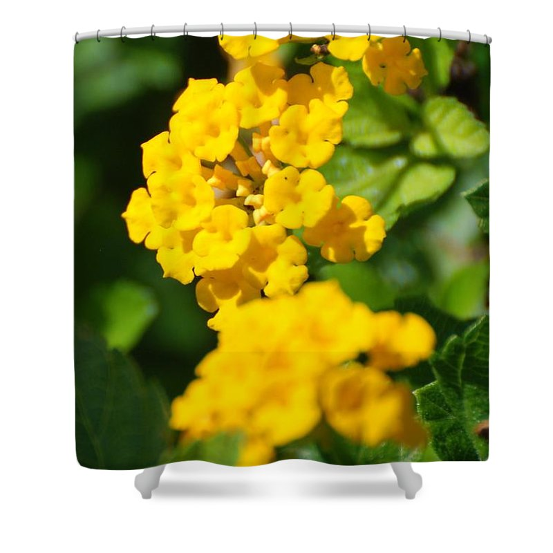 Flowers Shower Curtain featuring the photograph Yellow Blooms by Rob Hans