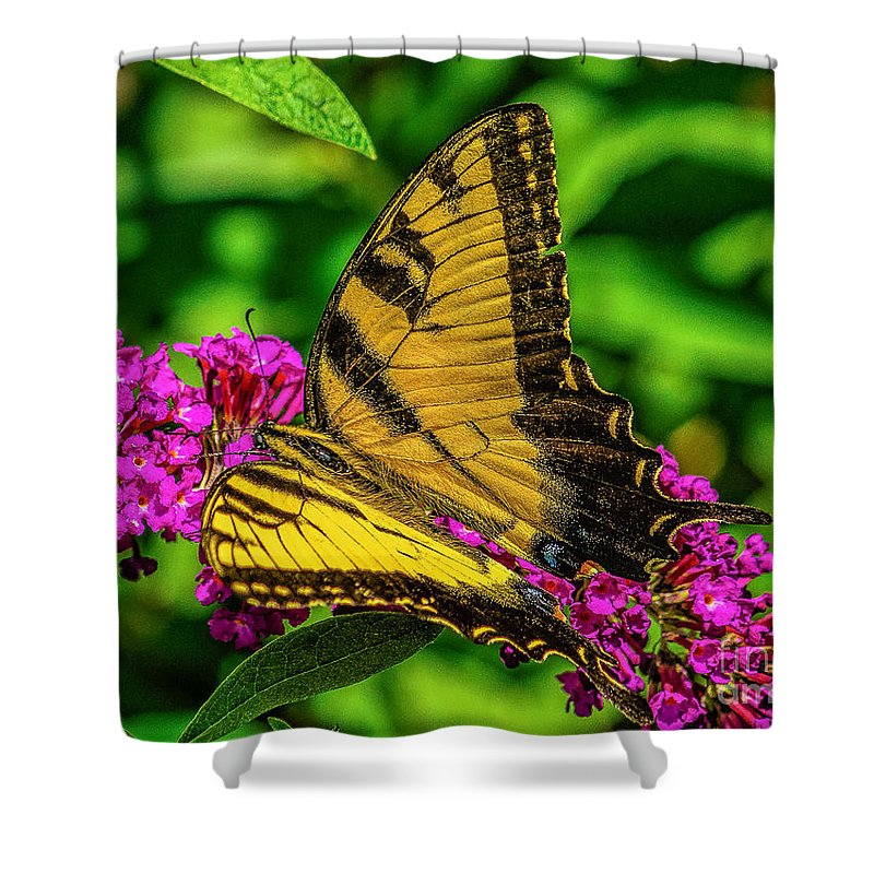 Tiger Shower Curtain featuring the photograph Yellow Butterfly In The Garden by Nick Zelinsky