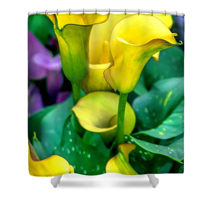 Spring Flowers Shower Curtain featuring the photograph Yellow Calla Lilies by Az Jackson