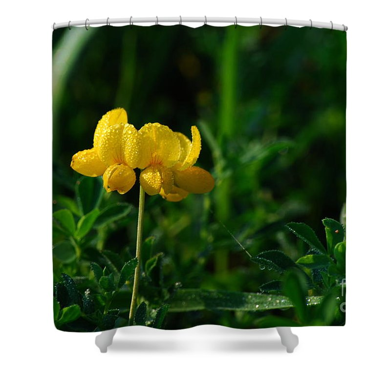 Birds Foot Trefoil Shower Curtain featuring the photograph Yellow Dew Drops by Michelle Hastings