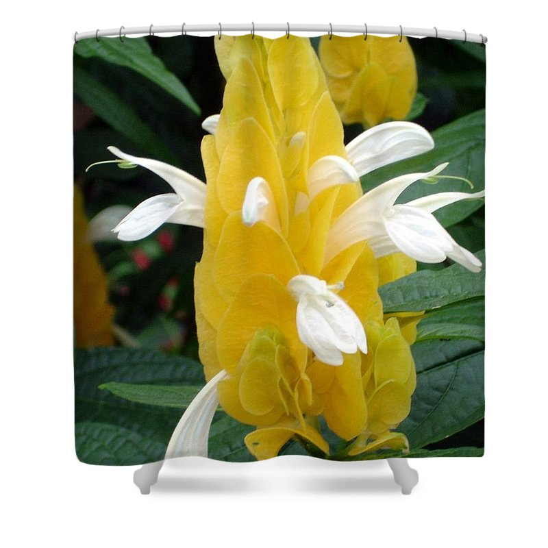 Flower Shower Curtain featuring the photograph Yellow Eruption by Shelley Jones