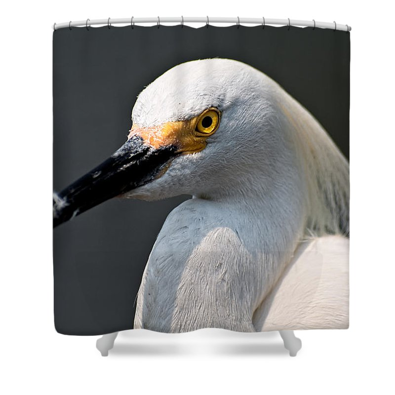 Snowy Egret Shower Curtain featuring the photograph Yellow Eye by Christopher Holmes