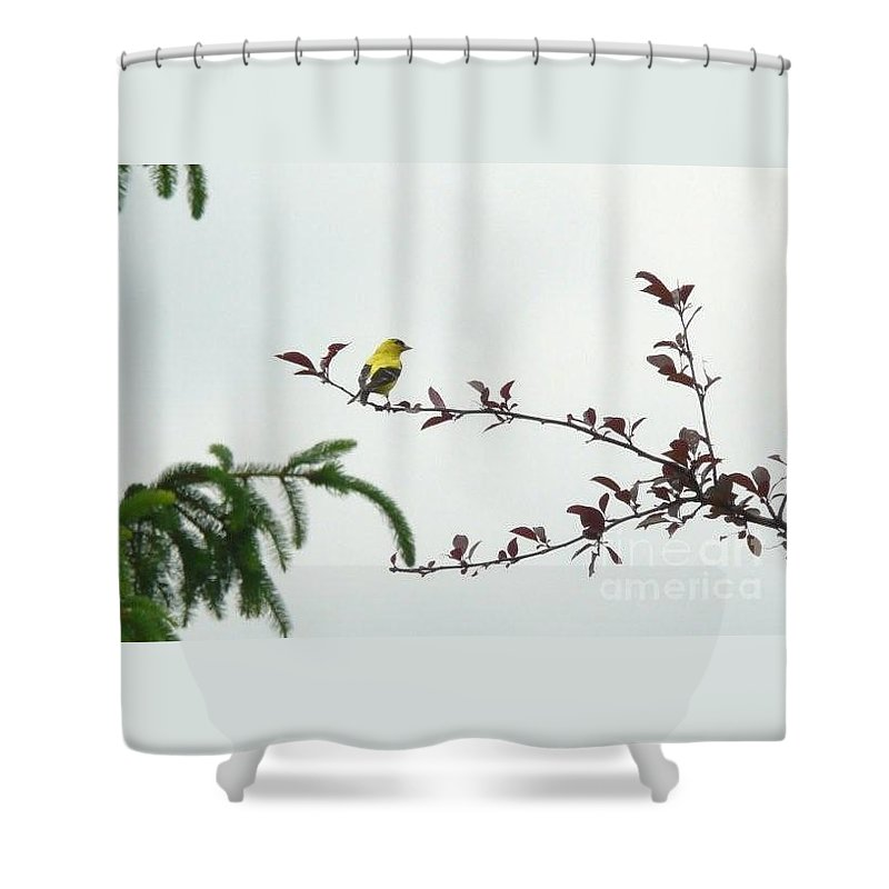 Finch Shower Curtain featuring the photograph Yellow Finch by Barb Montanye Meseroll