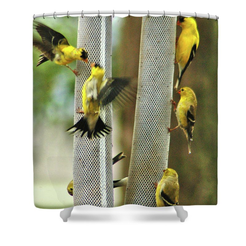 Yellow Finch Shower Curtain featuring the photograph Yellow Finch Feeding Frenzy by W G Smith
