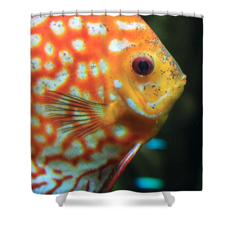 Carols Cards Shower Curtain featuring the greeting card Yellow Fish Profile by Carol Groenen