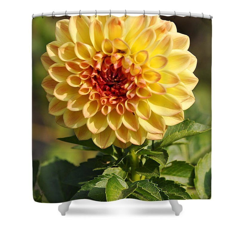 Clay Shower Curtain featuring the photograph Yellow Flora by Clayton Bruster