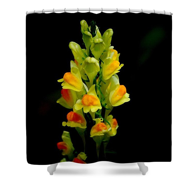 Digital Photograph Shower Curtain featuring the photograph Yellow Floral 7-24-09 by David Lane