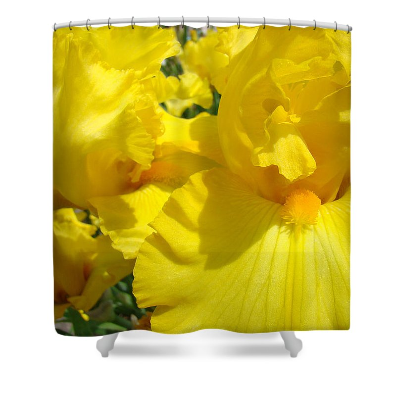 Iris Shower Curtain featuring the photograph Yellow Floral Irises Flowers Art Prints Baslee Troutman by Baslee Troutman