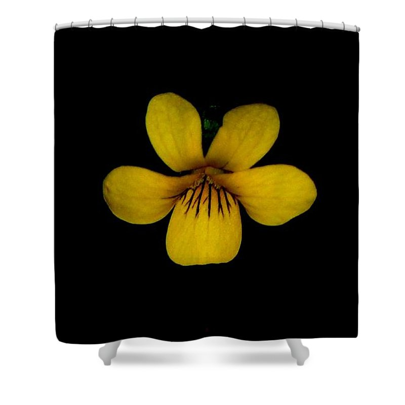 Landscape Shower Curtain featuring the photograph Yellow Flower 1 by David Lane