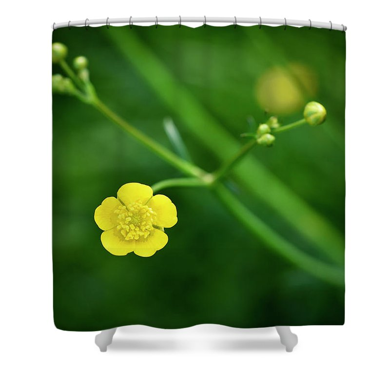Sunlight Shower Curtain featuring the photograph Yellow Flower Buttercup by Jozef Jankola