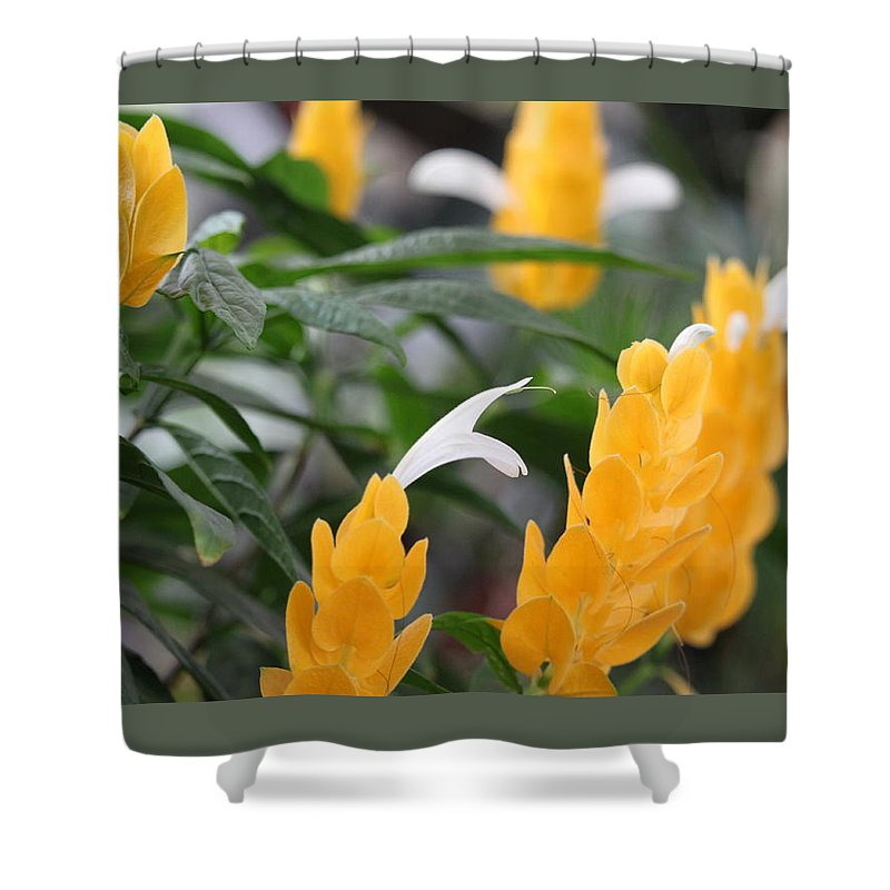 Shower Curtain featuring the photograph Yellow Flower by Cierra Brady
