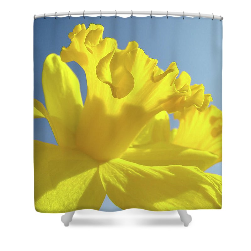 Flower Shower Curtain featuring the photograph Yellow Flower Floral Daffodils Art Prints Spring Blue Sky Baslee Troutman by Baslee Troutman