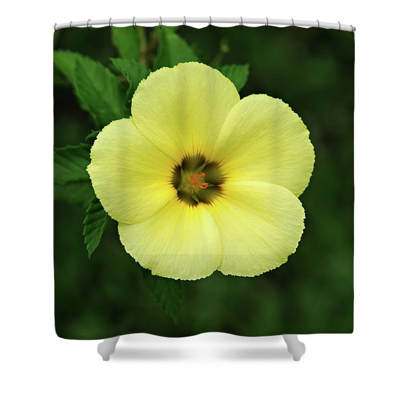 Flower Shower Curtain featuring the photograph Yellow Flower by Lik Batonboot