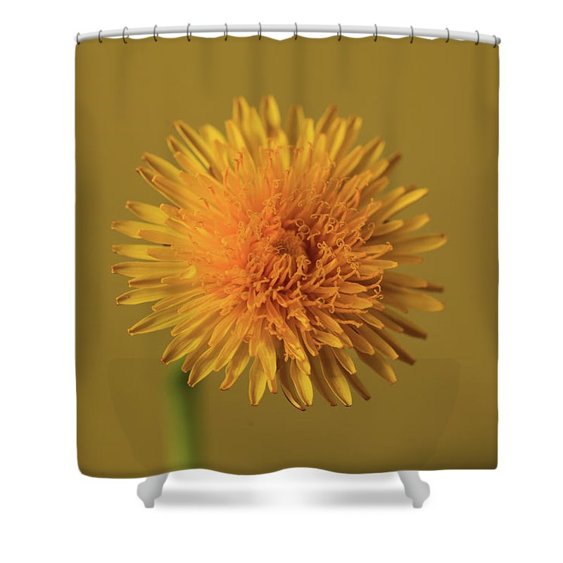 Yellow Flower Shower Curtain Featuring The Photograph With Backgroung By Bujar Jashari