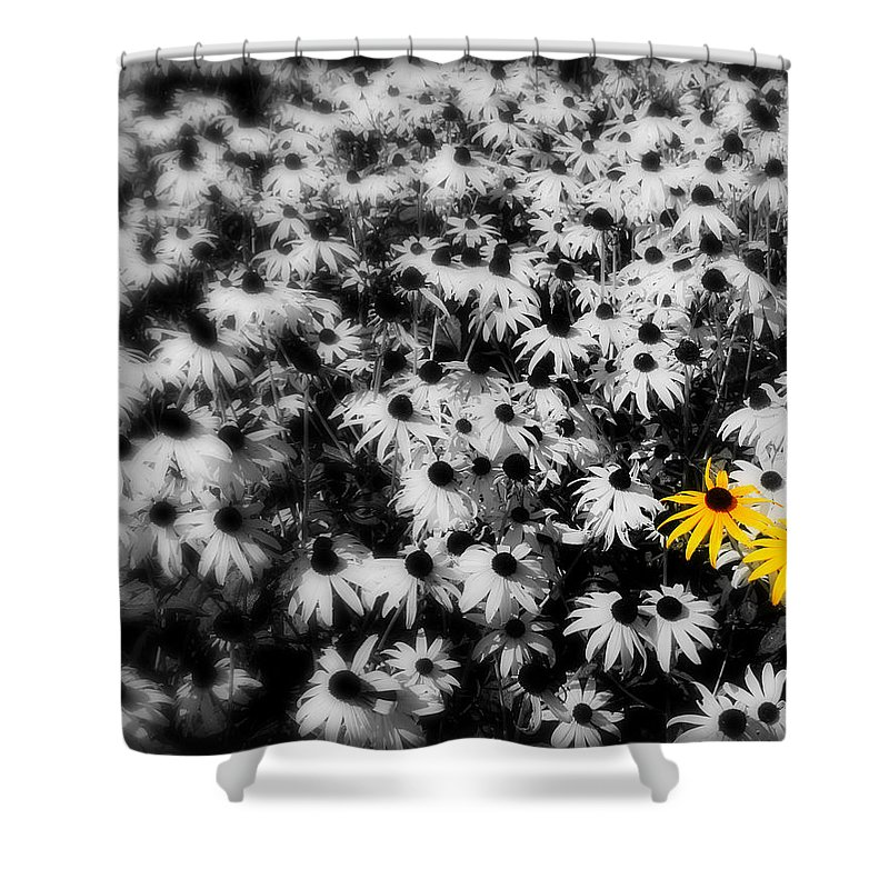 Yellow Shower Curtain featuring the photograph Yellow Flowers by Perry Webster