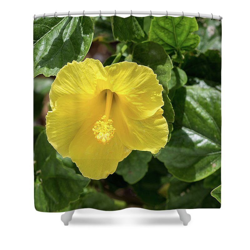 Floral Shower Curtain featuring the photograph Yellow Hibiscus by Thomas Whitehurst