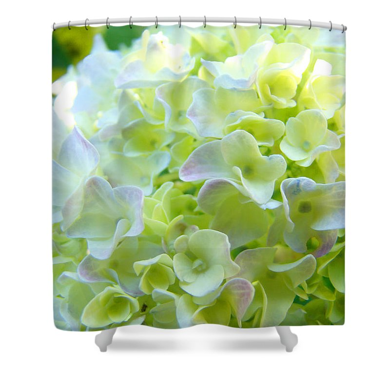 Bright Shower Curtain featuring the photograph Yellow Hydrangea Flowers Art Prints Baslee Troutman by Baslee Troutman