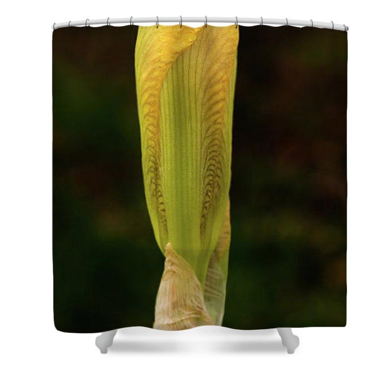 Iris Shower Curtain featuring the photograph Yellow Iris Bud by Grant Groberg