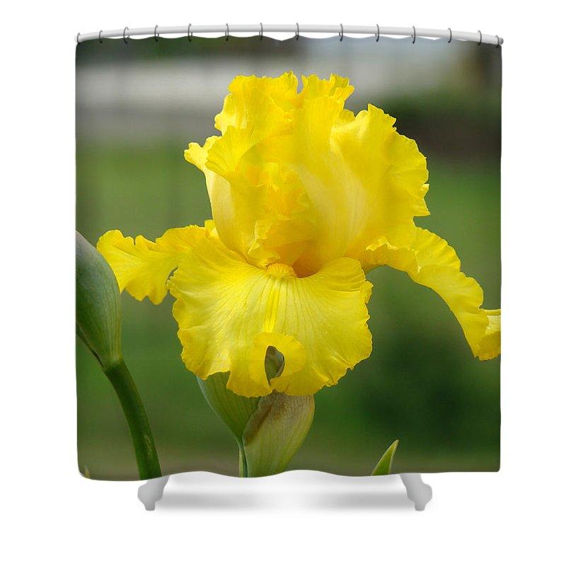 �irises Artwork� Shower Curtain featuring the photograph Yellow Iris Flowers Art Prints Cards Irises Summer Garden Landscape by Baslee Troutman