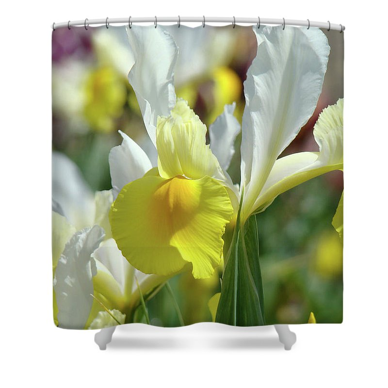 �irises Artwork� Shower Curtain featuring the photograph Yellow Irises Flowers Iris Flower Art Print Floral Botanical Art Baslee Troutman by Baslee Troutman