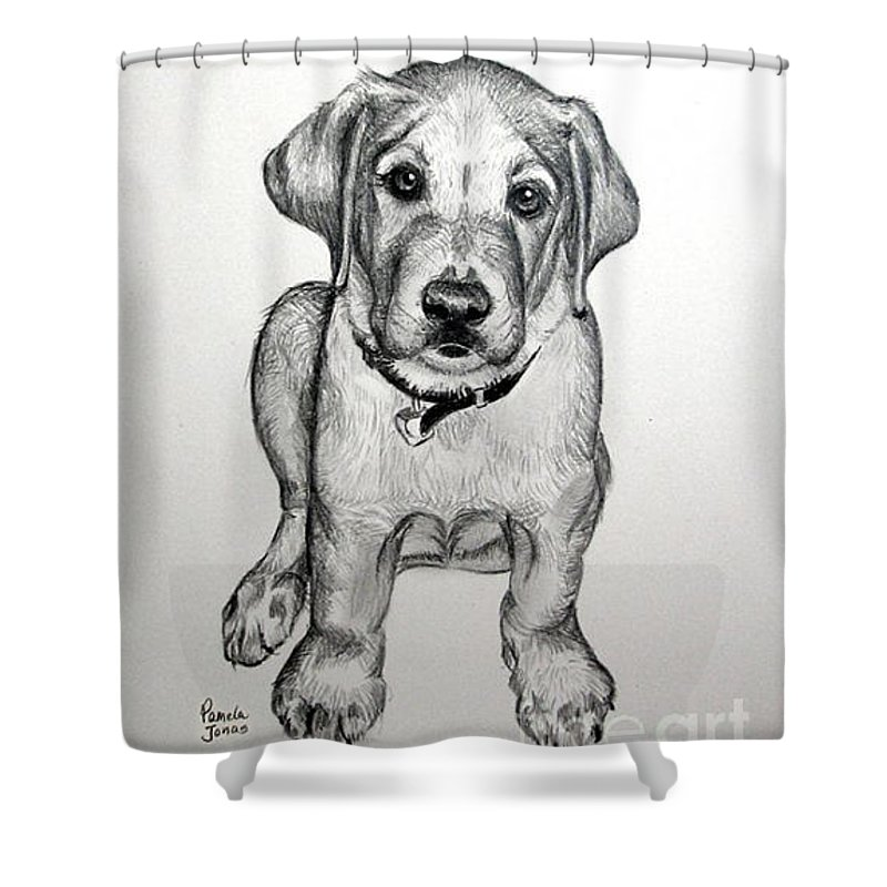 Pencil Portraits Shower Curtain Featuring The Drawing Yellow Labrador Puppy  By Pamela L Jonas