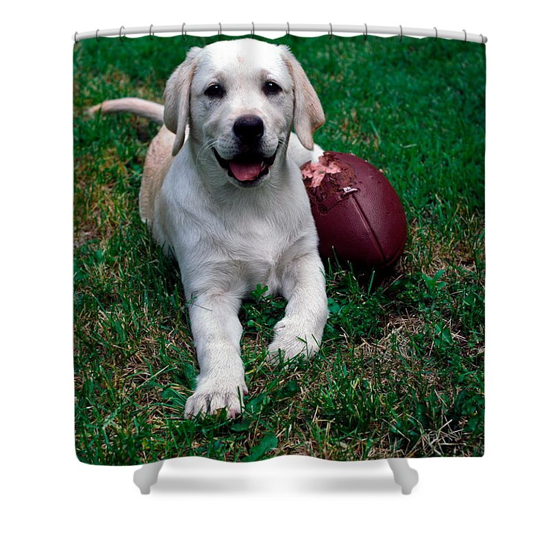 Yellow Labrador Retriever Puppy On Grass Shower Curtain featuring the photograph Yellow Labrador Retriever Puppy by Sally Weigand