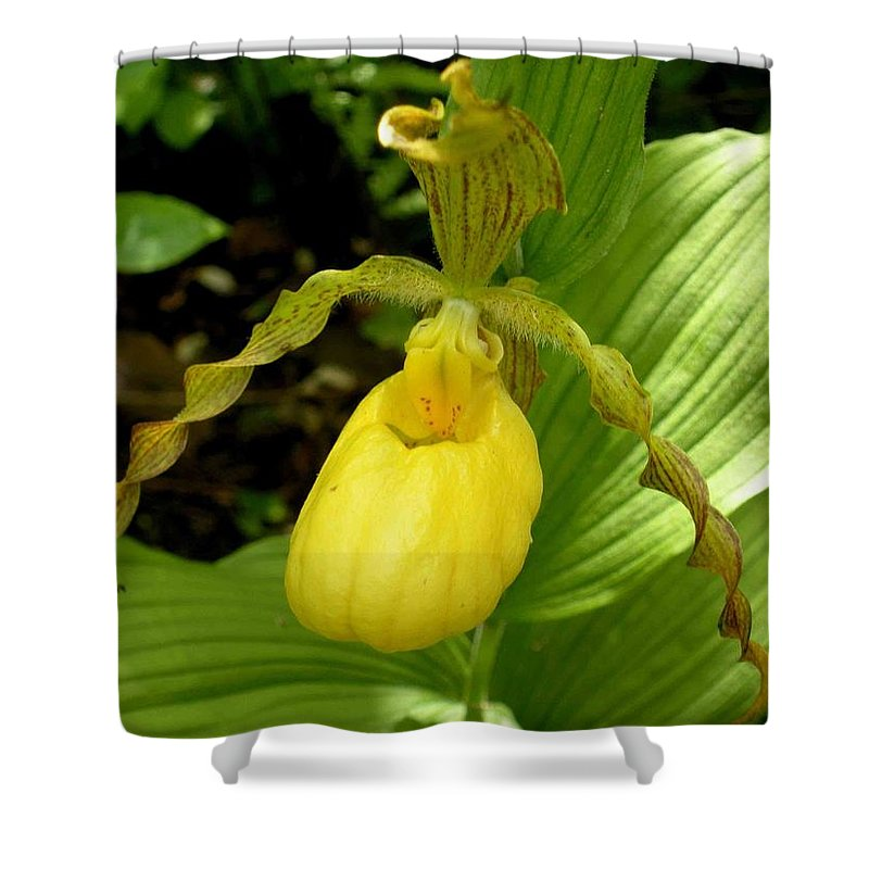 Orchid Shower Curtain featuring the photograph Yellow Lady's Slipper by Nelson Strong