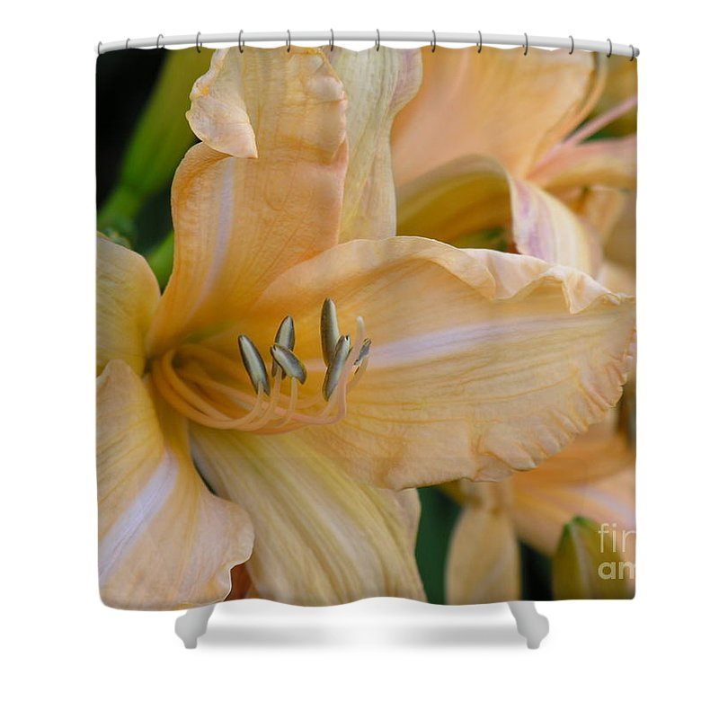 Yellow Shower Curtain featuring the photograph Yellow Lilly by Diane Greco-Lesser