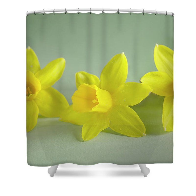 Yellow Mini Narcissus Shower Curtain featuring the photograph Yellow Mini Narcissus by Iris Richardson