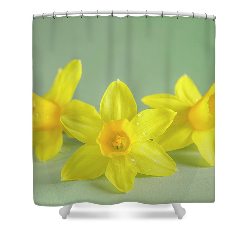 Yellow Mini Narcissus Shower Curtain featuring the photograph Yellow Mini Narcissus On Green 2 by Iris Richardson
