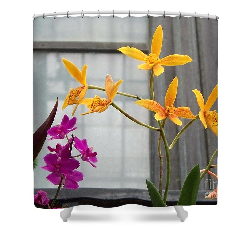 Yellow Shower Curtain featuring the painting Yellow Orange And Purple Flowers by Eric Schiabor