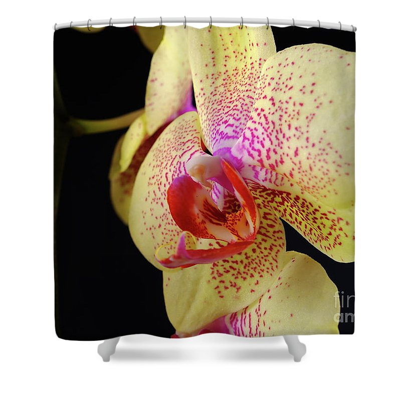 Nature Shower Curtain featuring the photograph Yellow Orchid by Dariusz Gudowicz