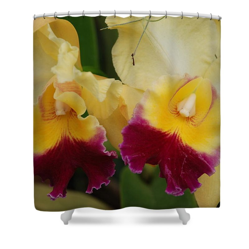 Macro Shower Curtain featuring the photograph Yellow Purple Orchids by Rob Hans