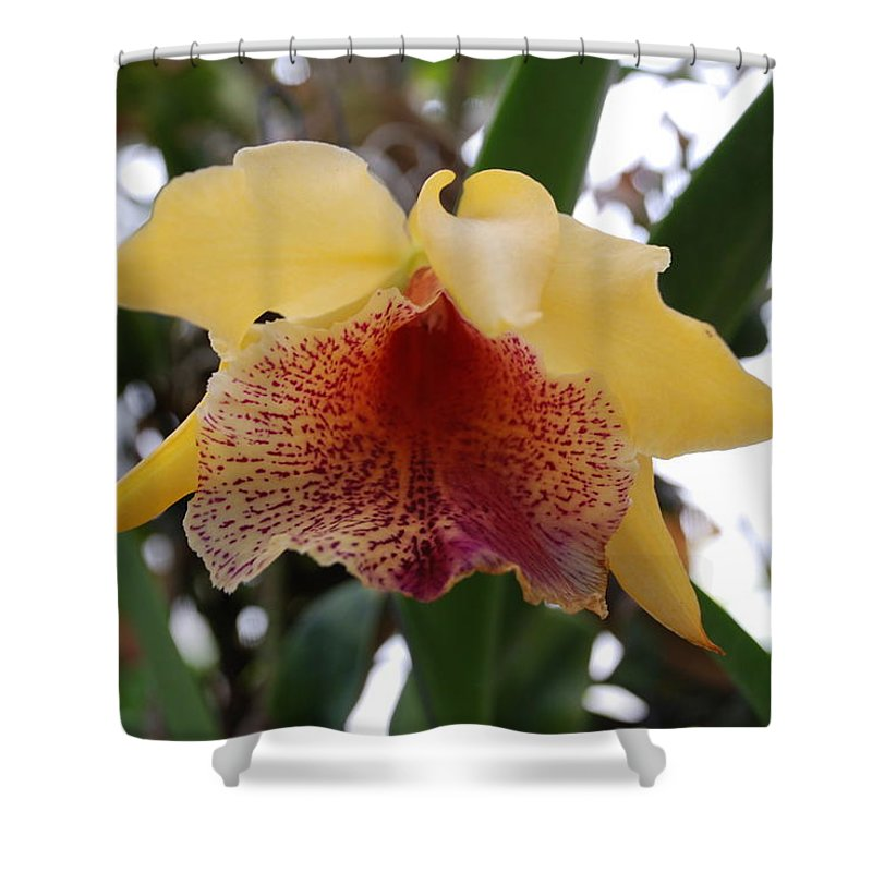 Macro Shower Curtain featuring the photograph Yellow Red Orchid by Rob Hans