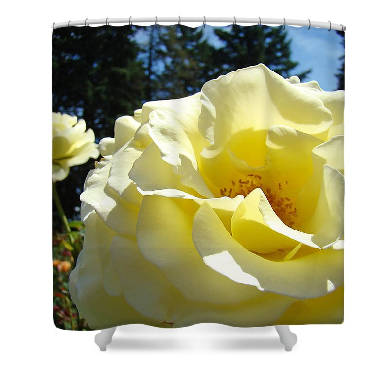 Rose Shower Curtain featuring the photograph Yellow Rose Garden Landscape 3 Roses Art Prints Baslee Troutman by Baslee Troutman
